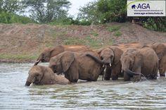 Im Wasserlochen suchen die kleinen Elefanten Abkühlung. Nairobi, Elephant, Animals, Elephants, National Forest, Animales, Animaux, Animal, Animais