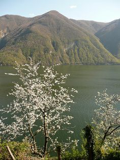Sentiero dell'Olivo (Gandria-Castagnola) Canton Ticino, Clean Beach, Alleyway, Palm Trees, Switzerland, Exotic, Paradise, Heaven, Poster