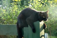 Black cat in the sun by AnnieDesign, via Flickr