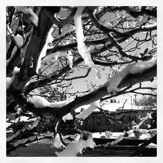Ice on trees.