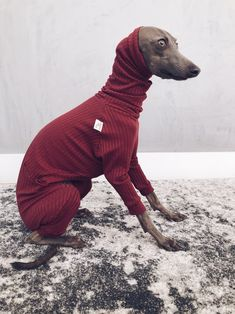 italian greyhound and whippet clothes / iggy jumpsuit / Dog Sweater / dog clothes / ropa para galgo italiano y whippet/ BURGUNDY JUMPSUIT Burgundy Jumpsuit, Pink Jumpsuit, New Outfits, Stylish Outfits, Italian Greyhound, Whippet, The Past, Stripes, Etsy