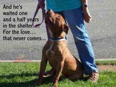 Poor Archie....he needs a lovng home and friends♥ pic.twitter.com/7vY5gFFMRI