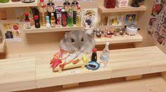 Hamster-Bartender (5)