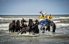 Schelpenvissen is even belangrijker...., door: Willem de Mol