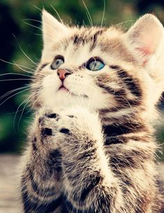"""""""Lord, thank you for my humans, my life and their love. Oh yeah, and treats! Amen."""""""