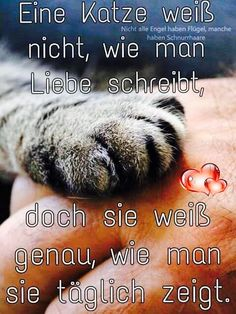 ❤❤ – ❤ Sprüche Tiere ❤❤ It is the same. ❤❤ – ❤ Sayings Animals ❤ – same thing I Love Cats, Cool Cats, Baby Quotes, Cat Supplies, Cat Facts, Cat Shirts, Animals And Pets, Funny Tshirts, Cats And Kittens