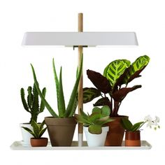 Inspirational Modern Indoor Plants With Lighting Grow Lighting For on Interior Design Modern Indoor Plants Grow Lamps, Plant Lighting, Ideias Diy, Light Images, Nordic Design, Scandinavian Design, Grow Lights, Cool Plants, Decoration