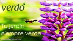 En Verdó te ofrecemos una gran variedad de productos para el bienestar de tu jardín. Venta de productos para controlar todo tipo de plagas de tu hogar como son cucarachas arañas hormigas roedores y plagas de tu jardín Plaguicidas fertilizantes y más. INSECTICIDAS RODENTICIDAS TERMICIDAS FERTILIZANTES ASPERSORAS HERBIBIDAS SEMILLAS SUSTRATOS FUNGICIDAS EQUIPO DE SEGURIDAD Estamos en Paseo de los Leones No. 1781 Cumbres 1er Sector entre Churubusco y 20ava. Teléfono: (81) 8311-2234 Facebook fan…