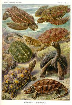 Kunstformen der Natur (1900)