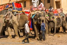 Amer Fort 005: The elephant will take you all the way to the fort. Amer Fort, Elephant Ride, Rajasthan India, Photography, Animals, Goa India, Photograph, Animales, Animaux