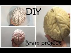 (34) How to Make a Brain Project DIY Brain #42 - YouTube