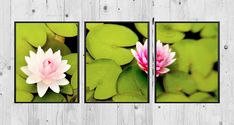 Water Lilies Triptych 3 Piece Wall Art Flower Photography