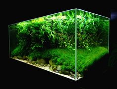 Aquascaping | Aquascaping World Competition - Gallery - Erosion by BONETTI Pascal