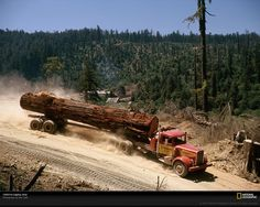 logging in the redwoods