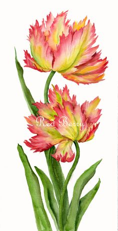 Floral Art Watercolor painting Original Tulips Flower Art Spring Celebrations Parrot Tulips