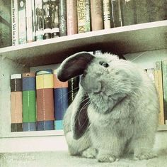 Floppy ears.
