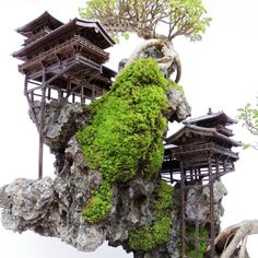 Bonsai Forest, Bonsai Art, Nature Aquarium, Planted Aquarium, Garden Terrarium, Bonsai Garden, Small Garden Landscape, Moss Garden, Paludarium