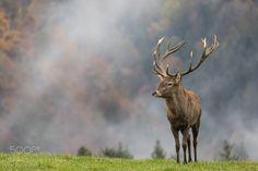 Red deer by first_photoholic via http://ift.tt/2e3UtZ4
