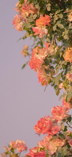 Wallpaper Nature Flowers, Flower Iphone Wallpaper, Flowery Wallpaper, Flower Background Wallpaper, Scenery Wallpaper, Cute Wallpaper Backgrounds, Flower Backgrounds, Pretty Wallpapers, Aesthetic Iphone Wallpaper