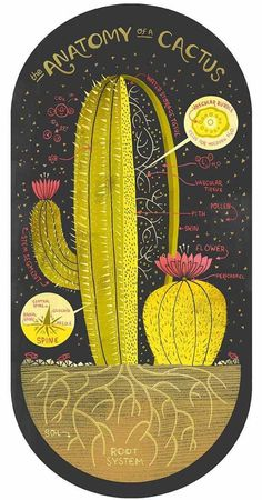 The Anatomy of a Cactus by Rachel Ignotofsky