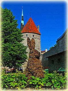 "Medieval Garden ""The Merry Maze"" - The Bunny, Tallinn Flower Festival"