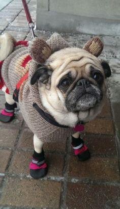 """Prepared for walk in arctic weather, Captain!"""