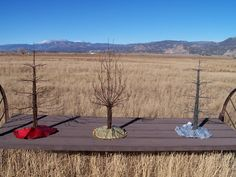 Rustic Recycled  Barbwire Trees.  Indusrial chic.