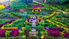 Buwakan ni Alejandra, Balamban's gorgeous flower garden | Sugbo.ph - Cebu Tagaytay, Flower Farm, Cebu, Ph, Tourism, Garden, Flowers, Outdoor, Board
