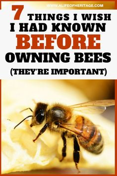 Just in case.Beekeeping is a fun hobby and business but there are a few things that might catch you by surprise if you have never kept bees before. Don't be caught unawares! How To Start Beekeeping, Beekeeping For Beginners, Bee Facts, Bee Hive Plans, Raising Bees, Bee House, Backyard Beekeeping, Hobbies To Try, Bee Friendly