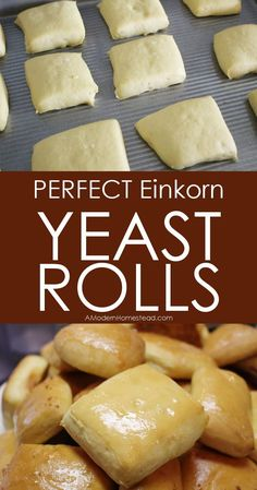 Yeast rolls make the
