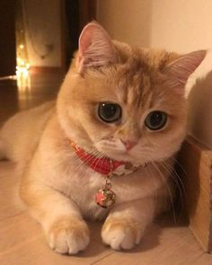 Shared by rabah. Find images and videos about cat, animal and kitty on We Heart It - the app to get lost in what you love. Cute Cats And Kittens, I Love Cats, Crazy Cats, Kittens Cutest, Cute Funny Animals, Funny Animal Pictures, Cute Baby Animals, Sad Cat, Sad Kitty