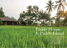 Paddy house