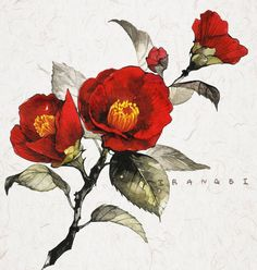Most recent Images Camellia flower Suggestions Camellia is really a precious time tested plant or even pine which brightens the unethical vicinity Botanical Drawings, Botanical Illustration, Botanical Prints, Watercolor Illustration, Korean Art, Asian Art, Watercolor Flowers, Watercolor Paintings, Watercolour