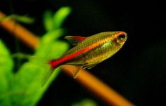 What Are Good Freshwater Fish For Beginners   RateMyFishTank.com