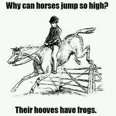 Horses' jokes!