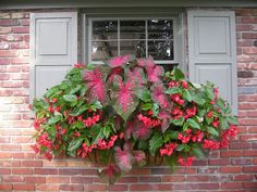 Window Boxes, Planter Boxes & Flower Boxes - Hooks & Lattice Shady window boxes - begonias and caladiums