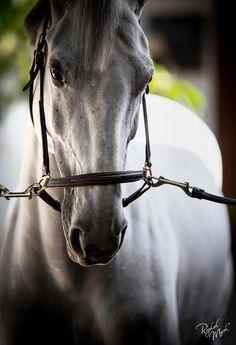 Raphael Macek Horse Photography