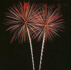 Firework Twin Palm's