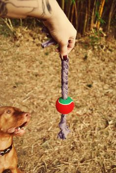 33 Dog toys you can make from things around the house - want to make some of the pvc treat puzzles as well as these braided old tshirt with tennis ball toys