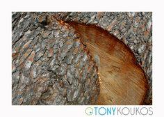 tree, trunk, wood, woodgrain, rings, bark, texture, rough, old