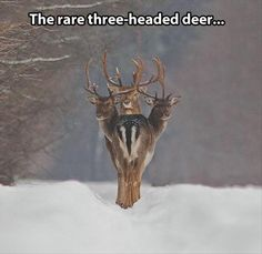Funny pictures about Magical creature. Oh, and cool pics about Magical creature. Also, Magical creature. Funny Animal Pictures, Funny Animals, Cute Animals, Photo Web, Humor Animal, Foto Fun, Fallow Deer, Perfectly Timed Photos, Oh Deer