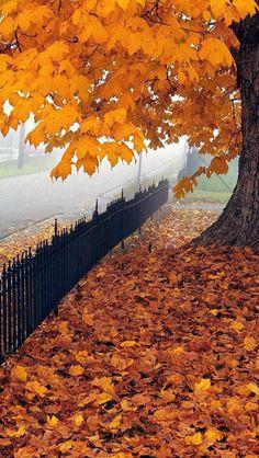Beautiful Maple Leaf, West Virgina, USA