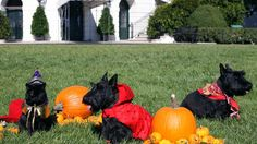 Find inspiration for your pup this Howl-O-Ween.