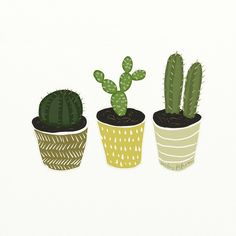 """좋아요 245개, 댓글 14개 - Instagram의 betsy petersen(@betsypetersen)님: """"Cactus Everdeen. #csplants"""""""