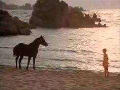 "A Favorite. Beautiful scene in the movie ""The Black Stallion"".(1979) Starring Cass Ole from San Antonio Arabians, Kelly Reno, Mickey Rooney and Terri Garr."