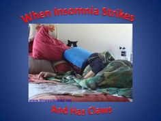 How to tell if your cat is plotting to kill you Insomnia, Satire, To Tell, Claws, Funny, Times, Humor, Ha Ha, Hilarious