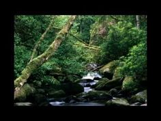 ▶ Deep Forest - Sweet Lullaby - YouTube