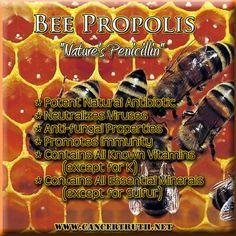 Bee Propolis: Nature's Penicillin Propolis Benefits, Bee Propolis, Healthy Diet Recipes, Healthy Foods To Eat, Paleo Diet, Healthy Drinks, Healing Herbs, Natural Healing, Natural Medicine