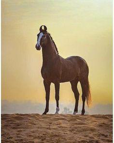 Horse from India , Breed : Nukra | Appaloosa horses, Horses, Horse love