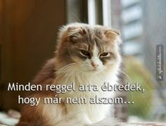 Micsoda bölcsesség! xD Funny Animals, Animals And Pets, Cute Animals, Funny Images, Funny Pictures, Bad Memes, Sad Stories, Cat Boarding, Funny Moments